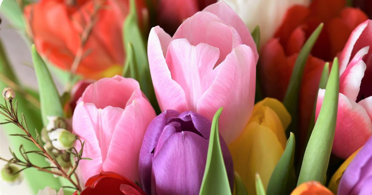Sponsoren in de bloemetjes